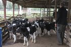 There was good demand at Levin and Rongotea yards this week.