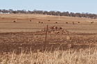 Drought-stricken countryside near Merriwa. Photo / Chris Russell.