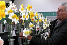 Graham Phillips admires some of the many daffodils blooms on show.