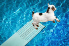 Jamie Mackay's trip down memory lane involved goats and swimming pools... Photo / File