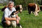 Northland beef and dairy farmer Murray Douglas says wandering stock should be properly managed to stop the spread of M. bovis. Photo/Tania Whyte