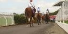 Watch:  Meet BGP - making horse racing great again