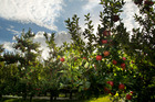 NZ Frost Fans is looking to expand in offshore horticulture markets. Photo / Warren Buckland