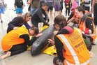Rescuers bid a tearful farewell to the first of two pygmy whales to be euthanased.
