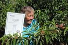 Georgetown orchardist Helen Brookes, holding the certificate acknowledging plant variety rights, inspects this year's crop of
