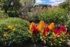 Gran Davisons garden  Photo/Supplied