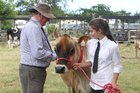 Dairy (and beef) cattle will be judged at Kaitaia's A&P show next month, but they won't be welcome at Broadwood.