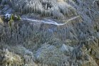 Sprayed wilding pines in a upper Shotover River gorge in 2014. Photo / Stephen Jaquiery