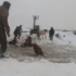 In Russia, farmers rescue 11 horses after they fall through ice