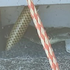 Australian fisherman trapped on boat with deadly tiger snake